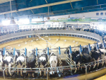 Kiwi rotary systems star in Chinese mega dairies