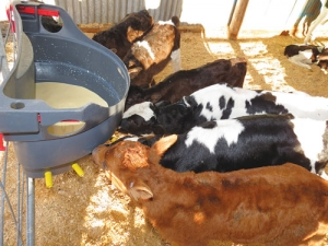 Measuring quality of colostrum can no longer be left to chance