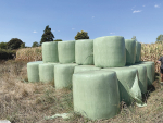 There are several ways to limit losses from silage while feeding out.
