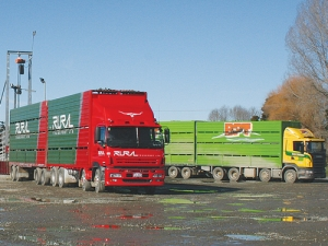 Transport firms are coming under increasing scrutiny over carting livestock not fit for travel.