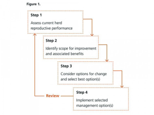 Take all the steps to lift herd performance