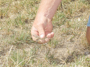 Southland farmers working through drought are facing a dwindling supply of supplementary feed.