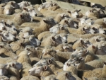 The North Island wool auction received revived support this week with an improved 81% of the 5700 bales selling.
