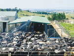 Slight rise in global dairy prices