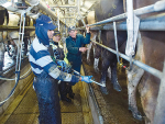 New rules on migrant workers will impact the dairy industry, says DairyNZ.