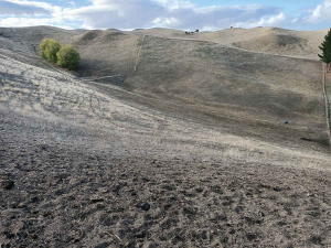 Hawkes Bay farmers are likely to encounter animal health and welfare issues soon as try to cope with the effects of what is believed to be the region's worst ever drought.