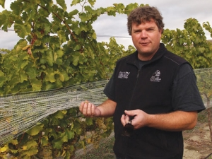 """The slow creeping menace of phylloxera can be viewed as a positive; as an opportunity to replace with better clones, different varieties and also to experiment"" says Matt Dicey, shown here with ripening Chenin."