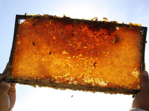 The authenticity of manuka honey exported from New Zealand is to be settled once and for all.