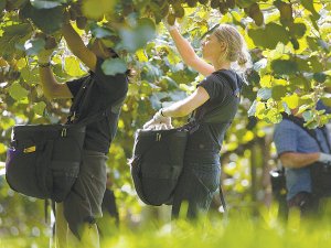 Seeka is upping its kiwifruit investment in Northland.