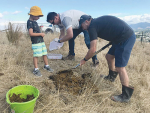 Marlborough District Council staff Alan Johnson and David Aires, with little helper Huxley Whitaker-Johnson, releasing dung beetles at Wither Hills Farm Park.