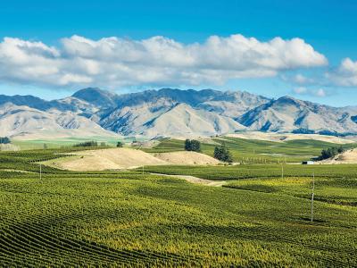 MyFarm investigates viticulture sector