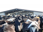 Dairy prices edge higher