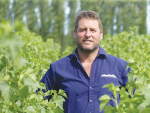 South Canterbury horticulturalist Hamish McFarlane amid tall rows of blackcurrants which he expects to harvest for Barkers in mid-January. Photo: Rural News Group.