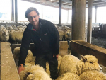 Fairlie farmer Nigel Bishell is using UHF RFID eartags on his flock and says it helps him achieve a big increase in lambing percentages. Supplied: ANZCO.