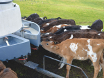 Start calves well for a healthy life