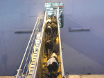 Live exports all at sea