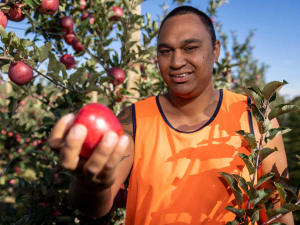 Maatutaera Tipoki Akonga is a finalist in this year's Ahuwhenua Young Māori Grower Award.