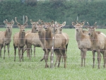 Deer may offer a good alternative to dairy support in the current economic climate.