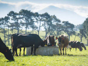 Beef + Lamb NZ, DairyNZ, Deer Industry NZ and Federated Farmers have all condemned the 2050 methane target as being far too draconian.