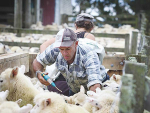 With new lambs on the ground farmers are being urged to make an internal parasite management plan for the coming season.