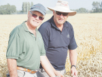 Give that man a Guinness – another world wheat record!