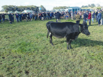 Farmers at a recent field day hear options for feeding cows.