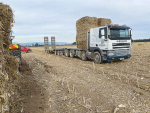 Maize stubble fills feed gap