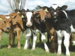 Copper deficiency could be linked to lameness.