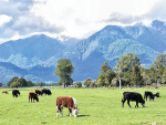 Pasture-based farming helps keep carbon footprint low