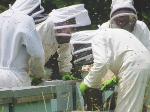 Smaller beekeeper operations are struggling with low returns for non-manuka honey.