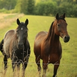 Equine industry signs up