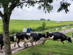 European farmers are being paid for keeping their cows outdoors.