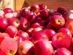 Apple and stonefruit growers are disappointed with MPI's revised directions.