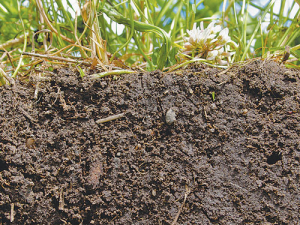 Soil is one of the most valuable assets that a farmer has.