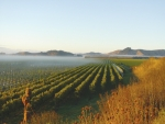 The  mysteries of New Zealand Chardonnay and Sparkling wine will unfold in beautiful Gisborne early next year. Photo: Kirkpatrick Estate Wines, supplied by NZW.