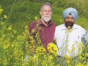 Professors Martin Barbetti and Surinder Banga with brassica crops.