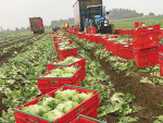 Growers are warning consumers to brace for significant price increases for vegetables.