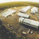Finland's largest farm milks 600 cows.