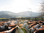 Programme to take beef into future