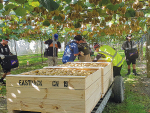 Both Hawkes Bay and Bay of Plenty have a shortage of fruit pickers.