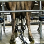 Making dairy workplace better