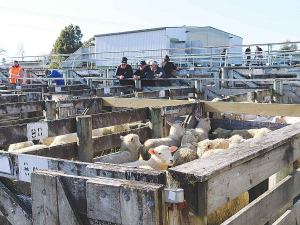 Farming key to NZ's future