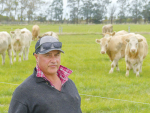 Brent Fisher with beet-fed 18 month Charolais steers on his Silverstream property at Greenpark.