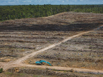 Greenpeace has released photos like this claiming deforestation is taking place in Indonesia by Fonterra's PKE supplier Wilmar. However, the dairy co-op cannot answer if this is the case or not and says it will have to 'check'.