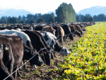 The taskforce has made 10 recommendations on improving winter grazing practices.