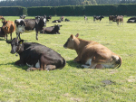 Average Canterbury farmer 'just treading water'