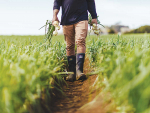 Water and labelling high on hort sector's election wish list