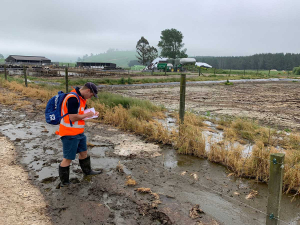 Council officer noting scale of overflow of effluent from feed pad on a farm at Oruanui, north of Taupō.