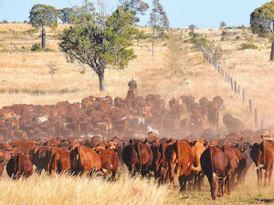 For the first time in 3 years Australian cattle prices are now lower than year-ago levels.
