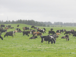 Antibiotic use in NZ dairy cows is much lower than that in the US, Canada or the Netherlands.